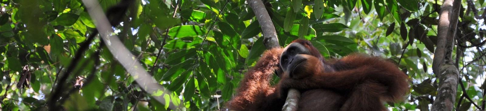 Sumatra e Bali 2010