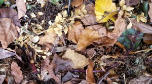 Leaves and Food Scraps Composting