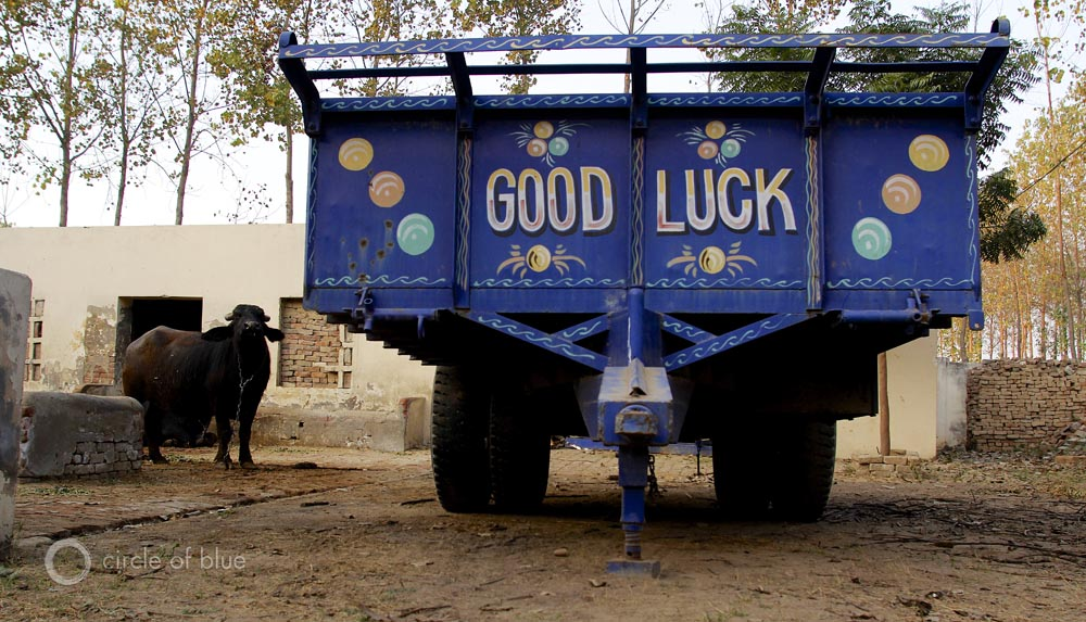 India water buffalo good luck tractor trailer Punjab Nawanshar Mandeep Dhaliwal Richa Sekhon family farm farming farmer water food energy choke point circle of blue wilson center aubrey ann parker
