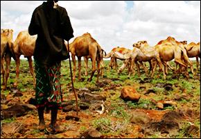 herd_kenya