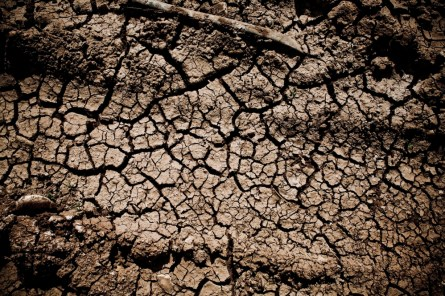 A dry field.