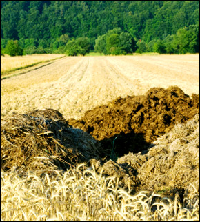 Runoff, often from cow manure spread on grain fields, can result in parasites and bacteria seeping into drinking water.