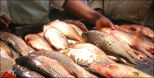 Fishermen sell the morning's catch at a market on the south shore of Lake Naivasha.