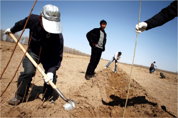 Tree-planting in KunlunQi in eastern Inner Mongolia by the NGO Roots & Shoots whose aim is to plant 1 million trees in the area to combat desertification. 2010