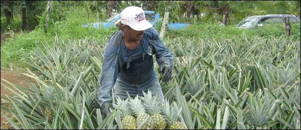 Latin America Agriculture