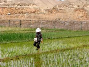 rice farming gansu province northern china food water energy Choke Point China Circle of Blue nadya ivanova