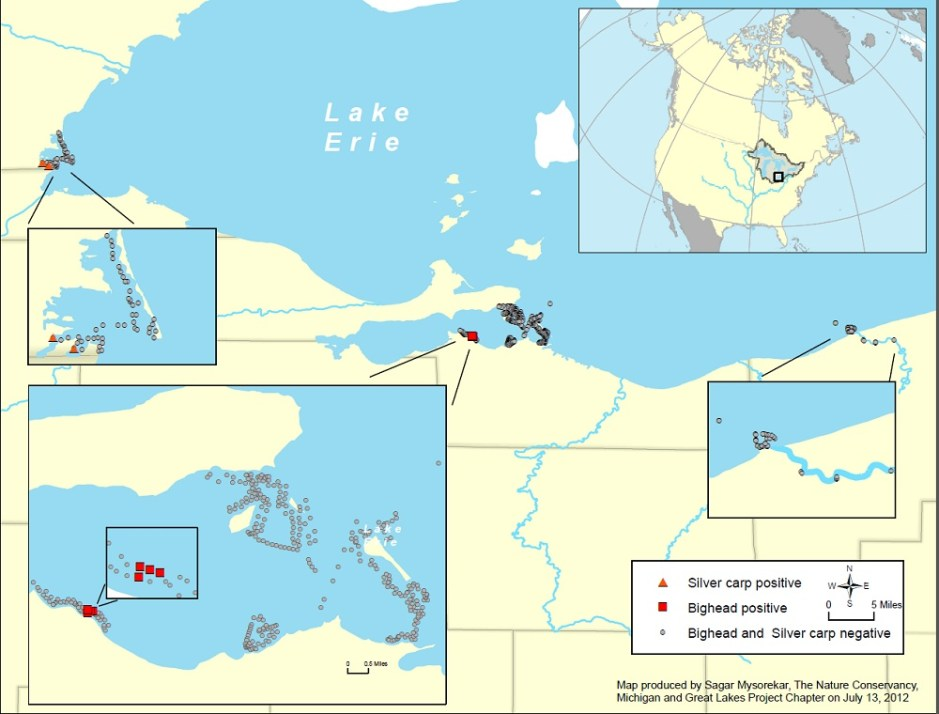 Has The Invasion Started Asian Carp EDNA Found In Lake Erie - Asian carp map 2016 non us