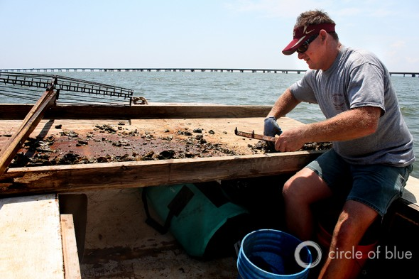 Shannon Hartsfield oysterman Eastpoint florida president of Franklin County Seafood Workers Association oysters Apalachicola Bay