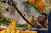 Farmers harvest corn Tongliao Inner Mongolia China