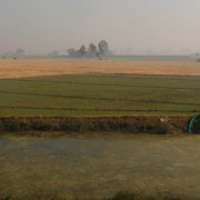 India, Choke Point India, groundwater, pumping, surface water, water reform, irrigation, agriculture, food production, rice paddy