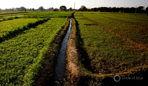 Punjab India flood irrigation farming groundwater