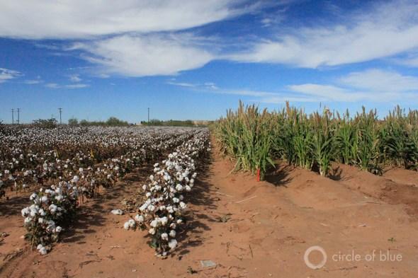 Cotton sorghum agriculture farming irrigation Ogallala Aquifer water Texas USDA