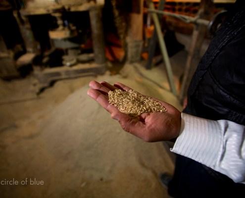 India Naraingarh Haryana Vinod Ashoka Gupta Shivshakti Rice Mill grain buyer production harvest depot trader seller water food energy choke point circle of blue wilson center j. carl ganter