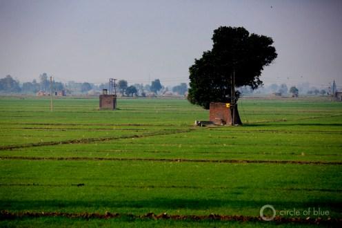 India Chandigarh Haryana Punjab Green Revolution electricity electric pump irrigation groundwater well irrigate farm farming farmer water food energy choke point circle of blue wilson center j. carl ganter