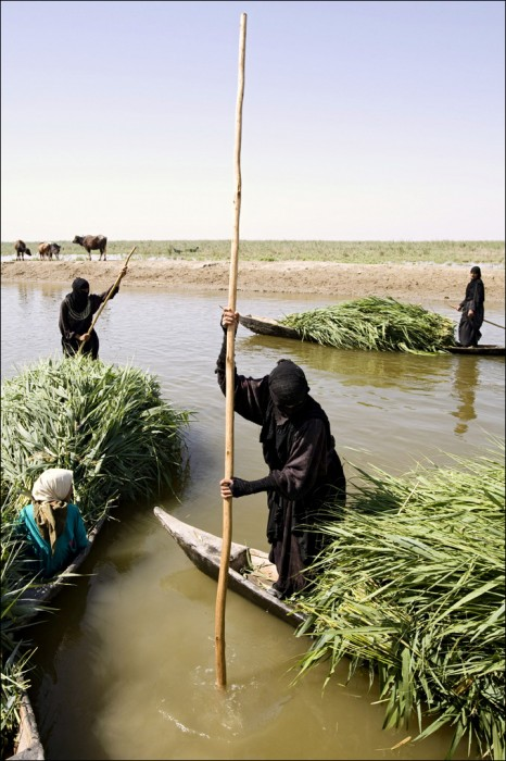 Nature Iraq marsh arab madan wetland mashuf floating shanty tigris euphrates river mesopotamia water buffalo indigenous people rights