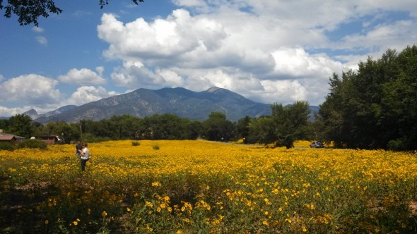 Taos New Mexico wildflowers goldeneye drought monsoon