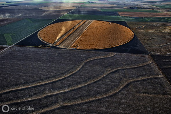 A golden circle, this one near Edson, Kansas, is the tell-tale sign of an irrigated corn field ready for harvest. Farmers in the Great Plains produce some of the highest corn yields in the world thanks in part to abundant water supplies from the Ogallala Aquifer. The aquifer, however, is draining away because more water is pumped out than filters back in.