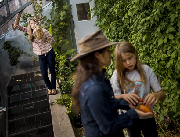 Lily Janssen (behind left) watches as her mother Ginger and sister Laela pick tomatoes from the family's green house.