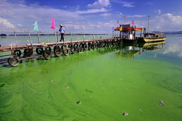 Dianchi Lake China toxic algae bloom