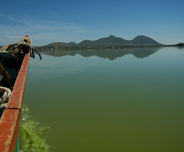 Lake Victoria toxic algae bloom