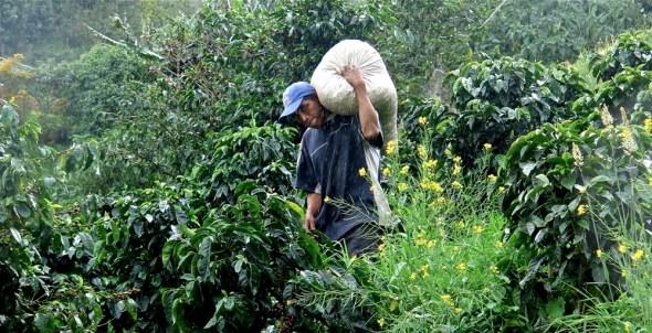 Boquete Panama Finca Lerida coffee tourism