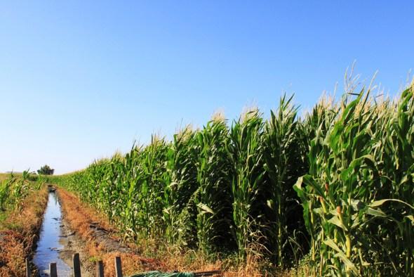 Clean Water Rule EPA corn field water ditch farms