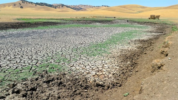 California Sacramento Valley cattle pond drought Maxwell circle of blue