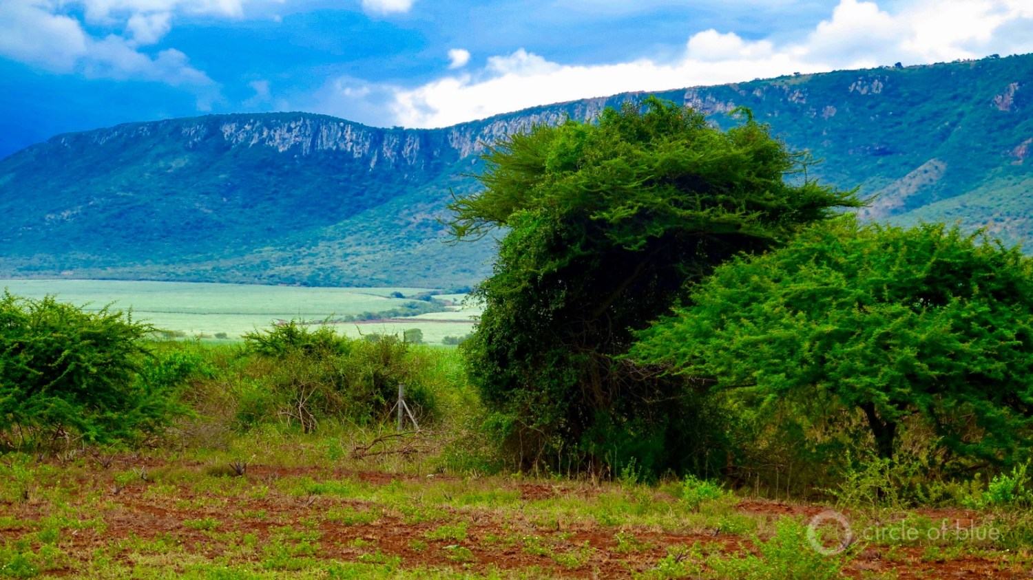 Sugar cane fields in northern Kwazulu-Natal province lap at the feet of the region's tabletop ridges.