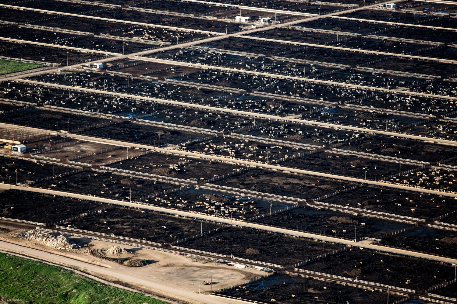 A cattle feedlot in Weld County, Colorado. Photo © J. Carl Ganter / Circle of Blue