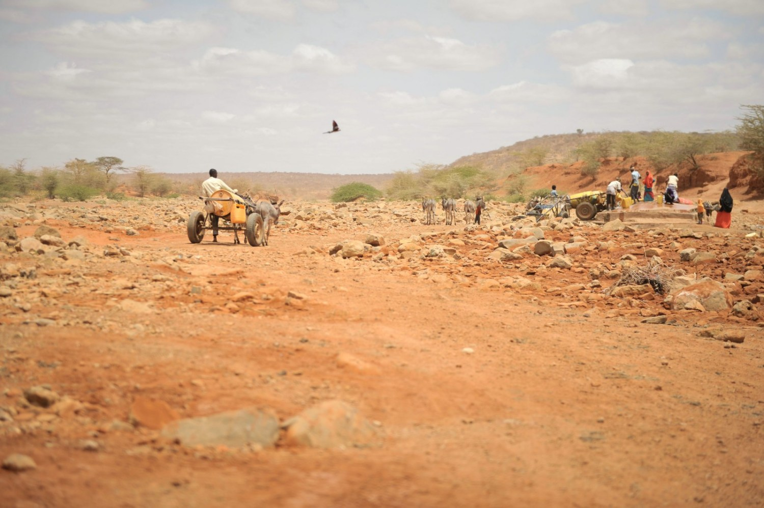 A man walks towards a well with his donkey cart to collect water in Garbahaarey town in the Gedo region of Somalia