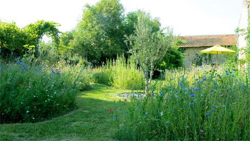 Misse wildflower meadow