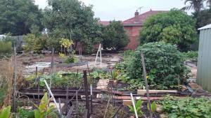 Vanessa and Ron Errol's backyard in Como, Perth