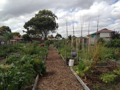 Avondale Heights Community Garden (Imahe Via MySmartGarden)