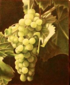 Barbara Medda - grappolo d'uva - olio su cartone telato