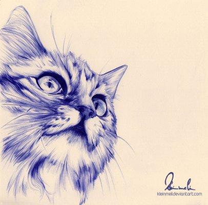 gatto - penna a sfera blu su carta