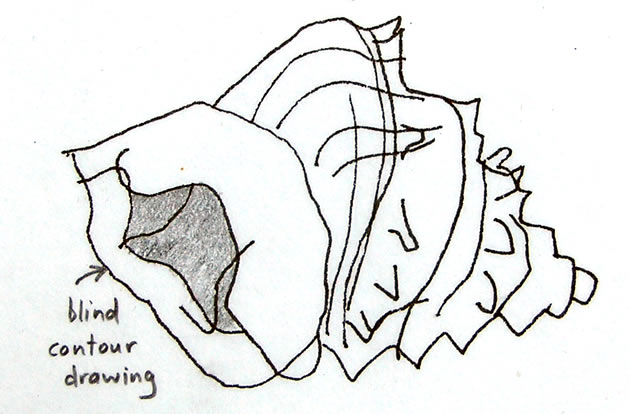 blind-contour-drawing-shell_0