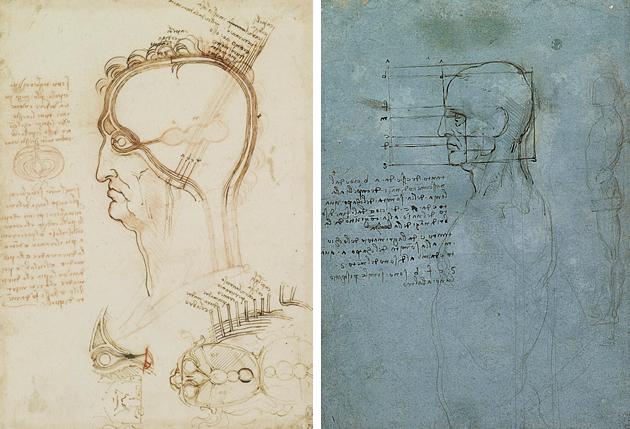 da-vinci-line-drawings