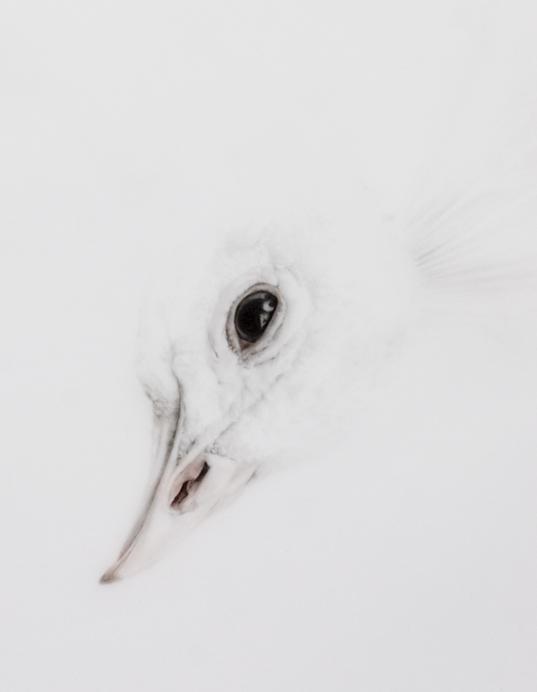 Never Forever bird detail small