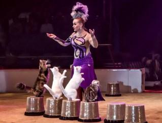 Cats miss Roslyakova - Circus Dictionary