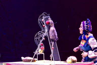A ferret : Anelya - Circus Dictionary
