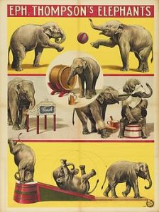 Eléphants de Thomson - Eléphants
