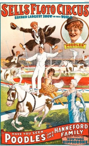 Poddles au Sells Floto Circus