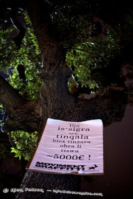 Trees at Valletta Terminus