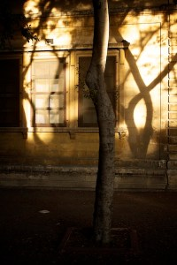 Tree Shadows,Alan Falzon,Circus Malta