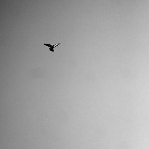 Pigeon,Alan Falzon,Circus Malta