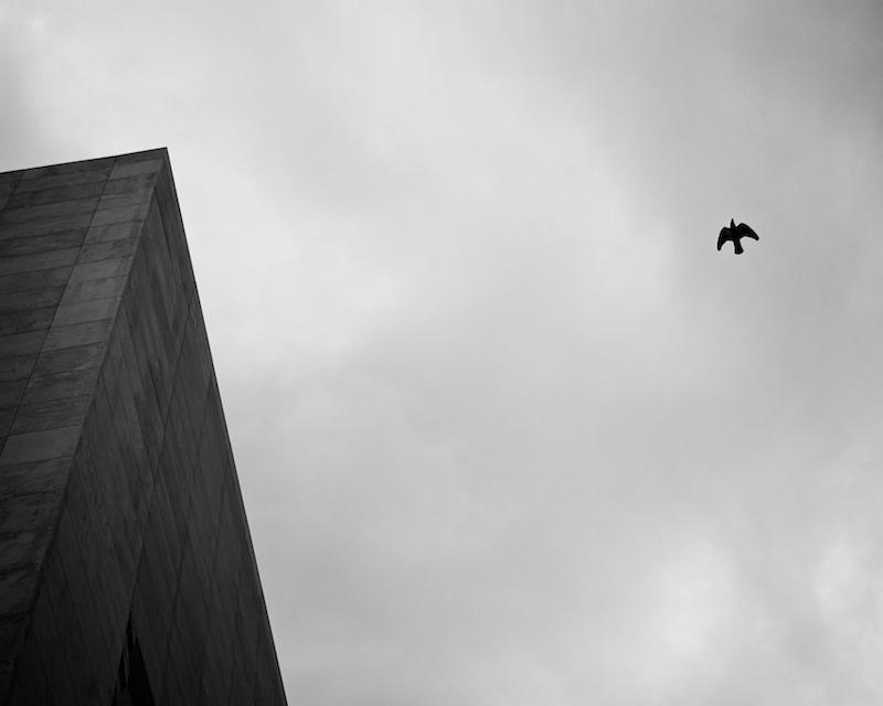 Pigeons flying around Renzo's parliament