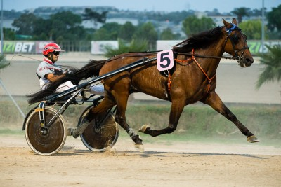 Warm up, Horse, Harness Racing