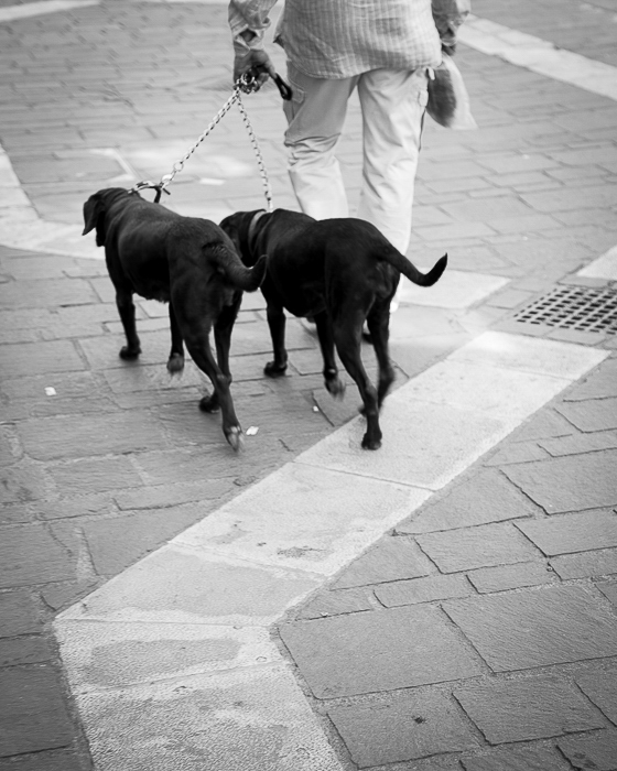 Best mates for a walk, Dos, Dog Walking, Valletta
