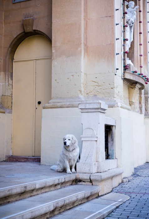 Church, Dog, Best friend waiting for his/her mate