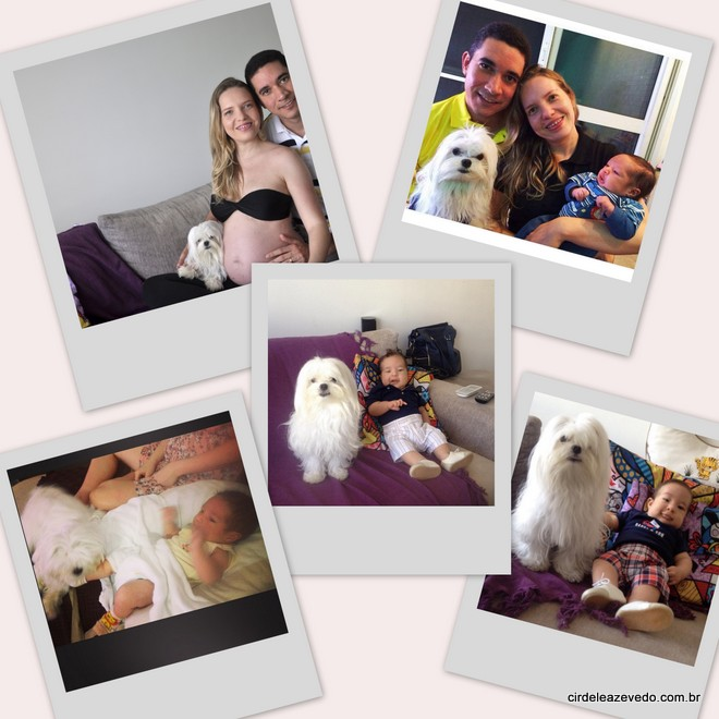 Nós quatro: o marido, o bebê, o filhote de quatro patas, o cão maltês Steve, e eu